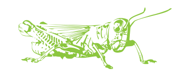 grasshopper kung fu club Logo